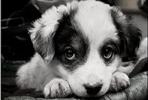 Must Love Dogs! / by Gail Jackson