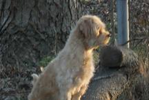 for my dog  / by Debbie Clark