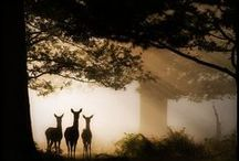 Memorable Maryland! / by Susan Lentell