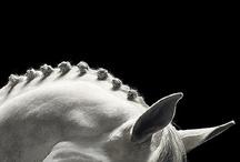   Equestrian Fantasy   / by Maryam Houbakht