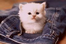 kittens <3 / by Karissa Gleave
