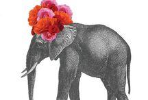 Mimiphons  / Elephants