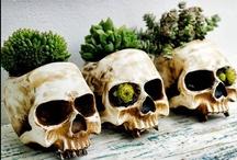 skull / by Rachel In Veganland