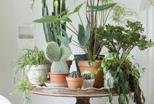 Grow | Houseplants / A collection of plants, great green displays, indoor nature and how to care for them.