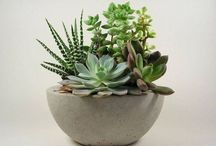 Succulents, Terrariums, & Miniature Gardens