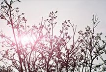 Primavera / Spring time. Il sole che filtra tra i rami sottili e le sagome delle foglioline appena spuntate creano un effetto che ricorda un pizzo rebrodè: prezioso e profumato di vento primaverile.