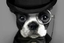 Be sweety dog
