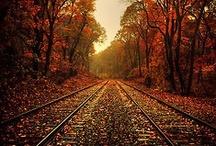 Autumn / The beauty of autumn