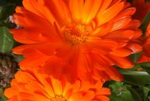 Hopton House Flowers