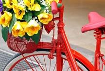 flower-bikes / by Astrid de Behr