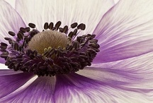 .: Flowers :. / by Pip Gunsch-van Glabbeek