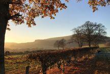 Shropshire | Autumn | Hopton House B&B / Autumn in Shropshire | Autumn colours | fall colors | autumn leaves