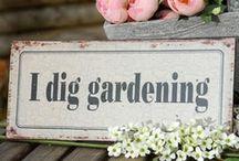 Gardening / by Ann Potter
