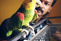 Preethi Farms / PREETHI FARMS is the best online source for Exotic birds in India.   Our aim is to offer you the best Exotic Birds, Exotic Birds Food, Bird's Products & Birds related information on the web.  For buying & selling all type of Birds & Pets contact...  Mahesh  Ph - +91- 9787525252 / +91- 8489525252  *We are not open to the public on a daily basis but if you wish to see our birds please contact us and schedule a visit.  visit us at - www.preethifarms.com