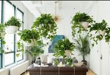 Office Greenery / Incorporate nature into the workplace. It increases creativity, productivity, and well-being.