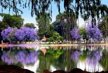 Riverside, CA / by kim du bry