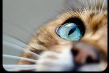 Cat-tastic / by Nicky Framboise