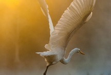 Avian / by Kadag Drolma