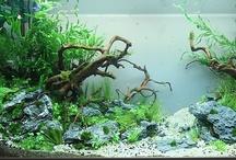 aqua's ! / Aquarium, Aquascaping, shrimps, fish... and others :-p