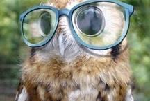 Avian - Owl / by Kadag Drolma