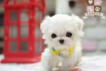 Cute pets / by Gloria Pietruszka