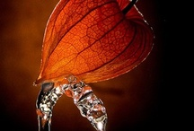 Seed & Pod & Shroom / by Kadag Drolma