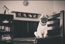 ~ Pug hugs~ / Pugspiration ~ when only a cute pug will help!