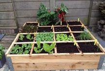 Home - Vegetable Garden