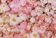 """Photography / Flowers / """"I must have flowers, always, and always."""" - Claude Monet"""