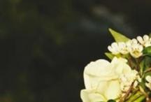 I <3 Jennifer Lawrence / by Kellen Helies
