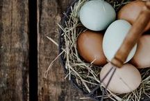 chics and eggs / by Carrie Abberger-Thomas