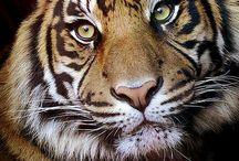 Animal Life / by Samantha Michael