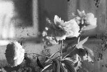 fleur / by VIOLA LOVELY