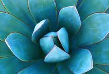 Succulents ✿ sedums ♥ semperivums