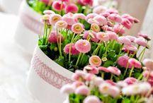 flowers •✿•♥•✿• εїз