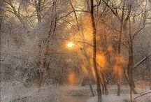 Winter Wonderland / by Lyndsay Starks Guhr