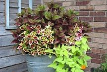 outdoor decor / by Kim Shook