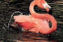 Flamingos / by Leah Baker