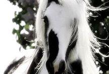 Majestic Horses / Horses