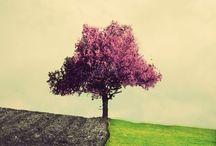 Alone trees / by Caitlin Chotrani