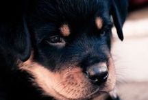 Beautiful Dogs and Cats / I just love them...
