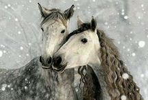Gorgeous Horses and Ponies / Horses and Ponies I just love them..