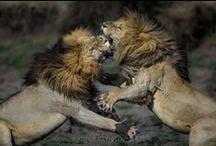 Beautiful  Wild Animals / The beauty of animals..