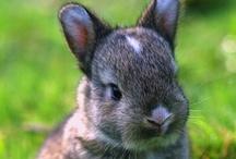 Beautiful Bunnies / Because I love them..