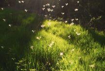 perfect light / by Caitlin Chotrani