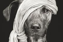 ★ animal days ★ / Animal Art / by Sandra Stoiber Fotografie
