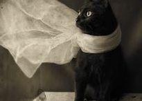 K-k-k-a-t-z! / Cats