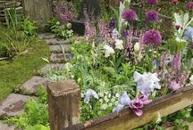 garden inspiration / Garden ideas and inspiration  / by Judith Coan-Stevens