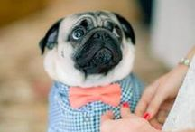 Animals in style