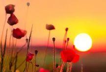 Seasons -- Summer / Beautiful, rich summertime lovelies.